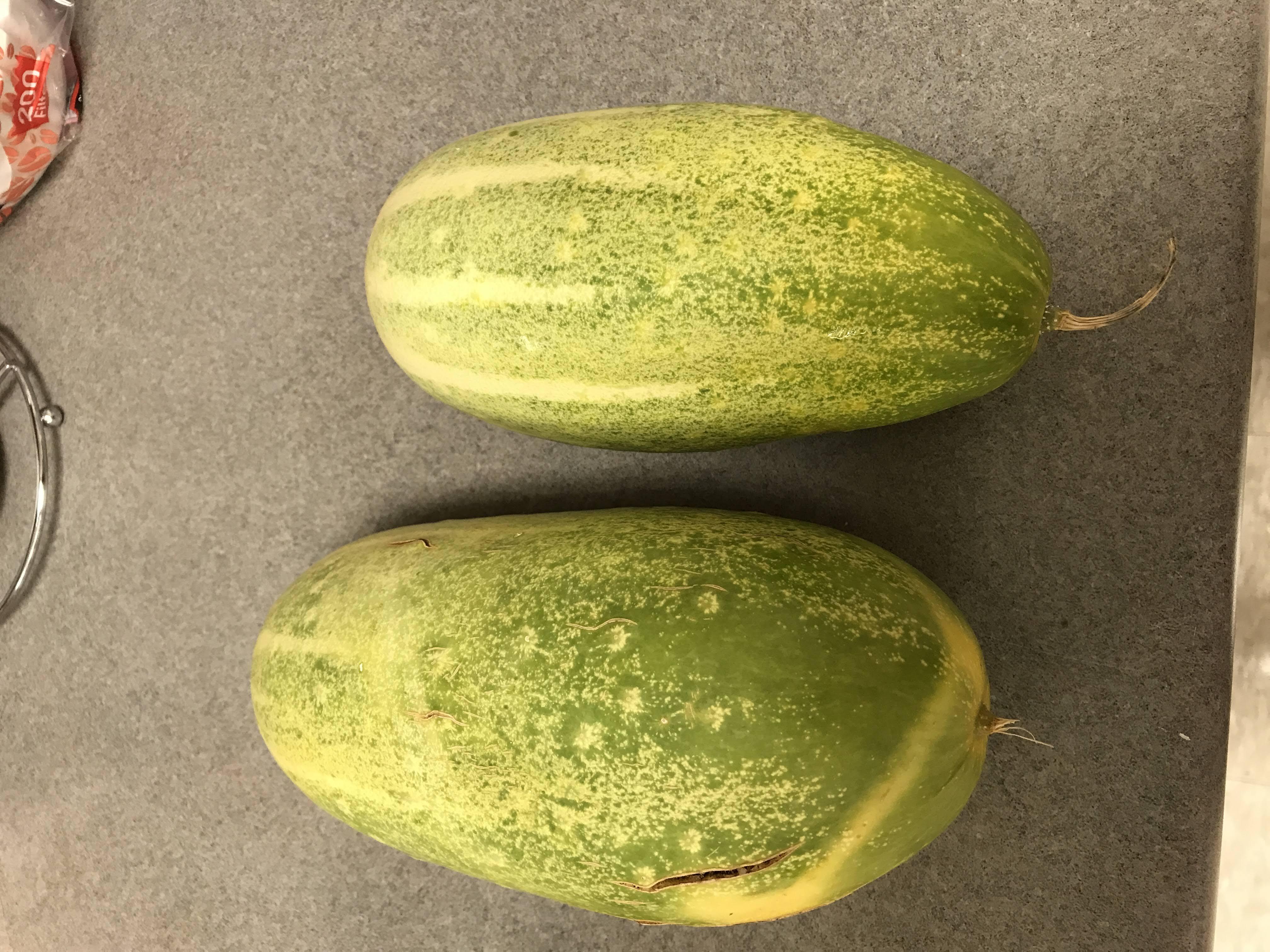 Dib (Hmong cucumber)