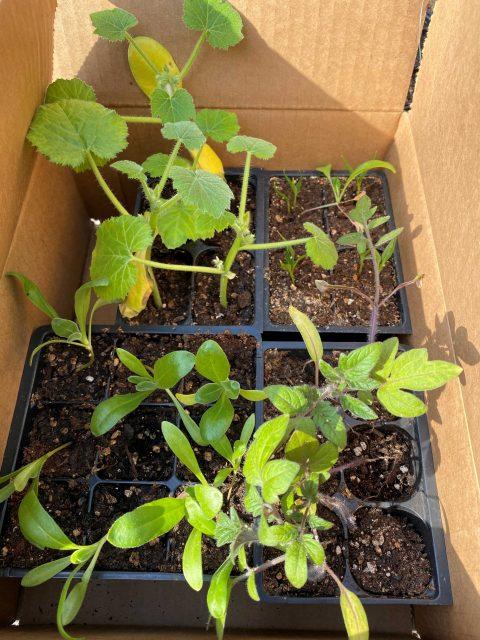 Garden Seedling Start Pack